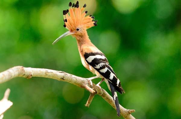 soñar con aves exoticas