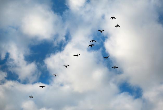 sueños con pajaros volando