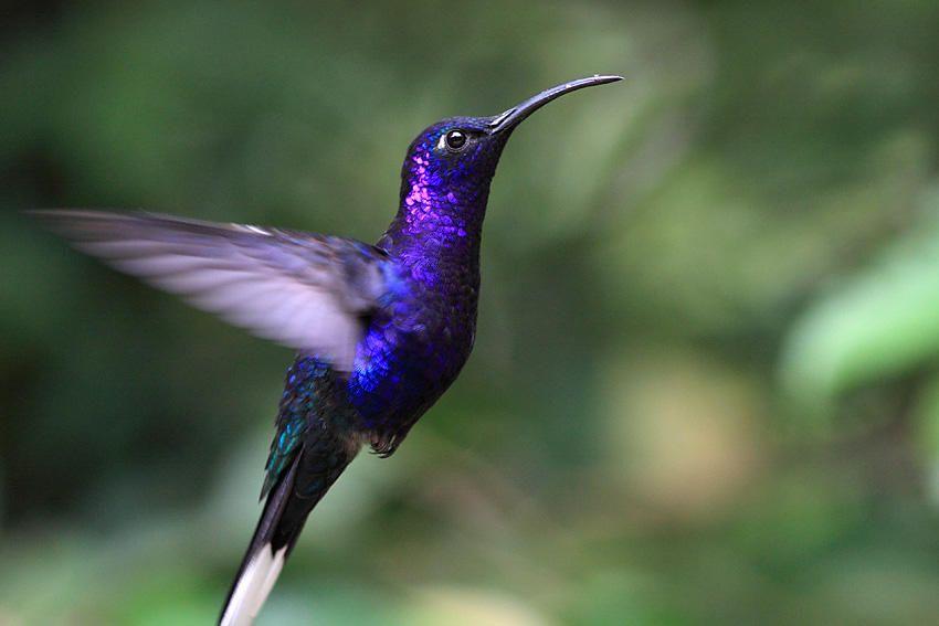 significado de sueños con pájaros exóticos