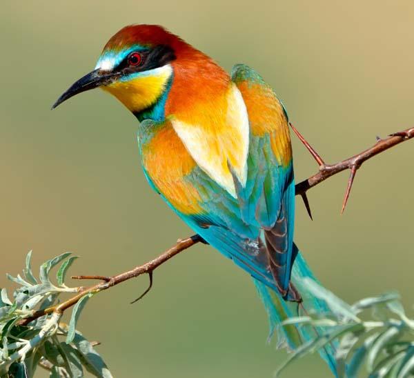 Soñar con Pájaros de Colores