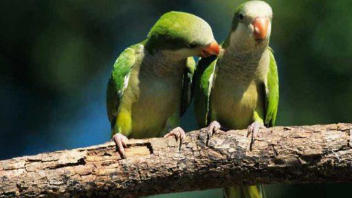 que significa Soñar con pájaros verdes