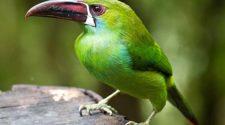 Sueños con pájaro verde
