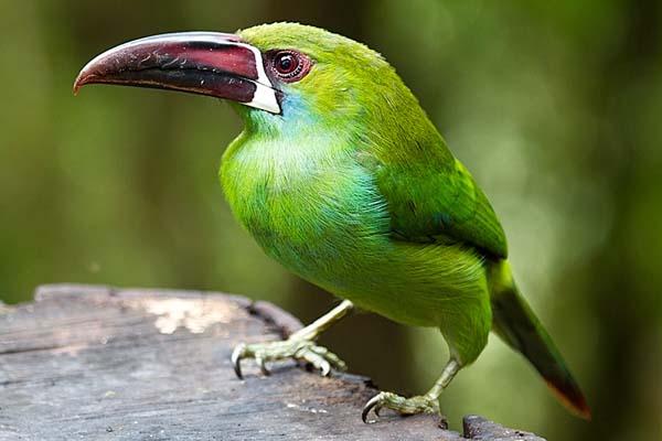 Soñar con Pájaros Verdes