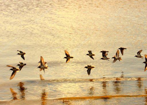 soñar con pájaros volando