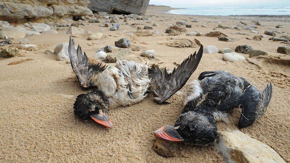 Soñar con Aves Muertas