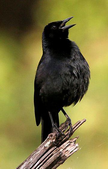 significado de los sueños con pájaros negros