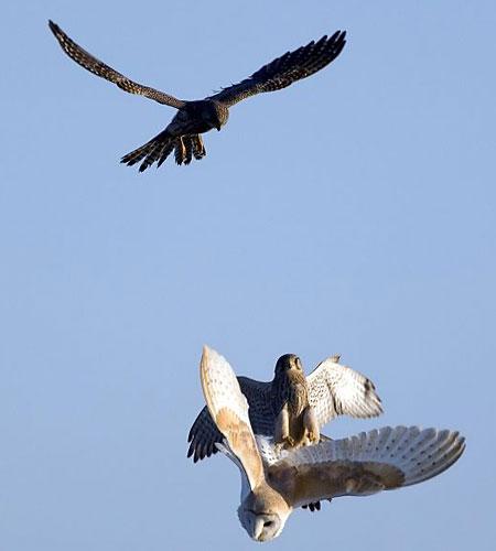 soñar con pájaros que te atacan