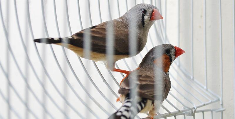 Soñar con pájaros enjaulados
