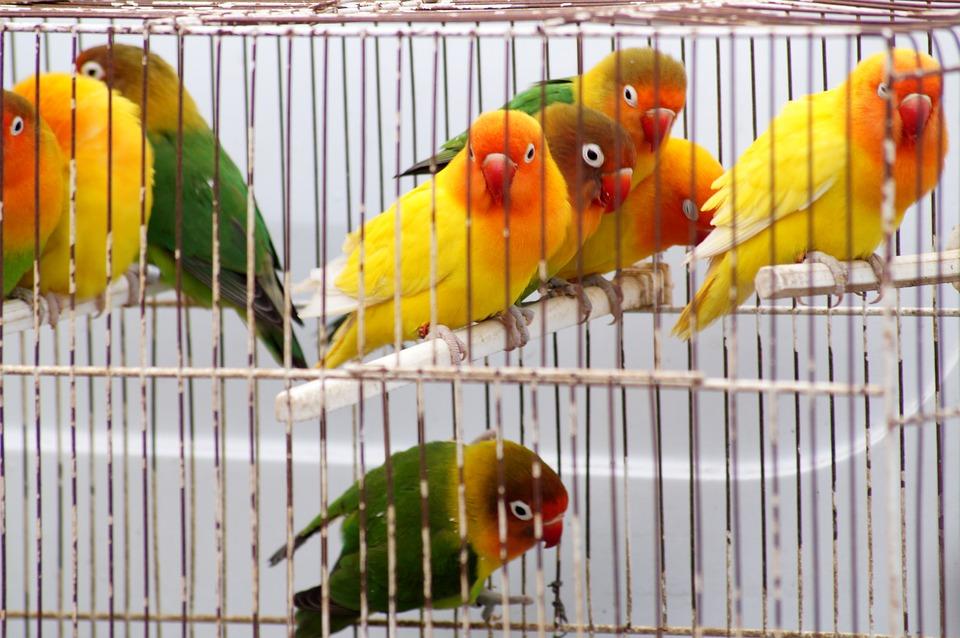 Soñar con un pájaro en una jaula