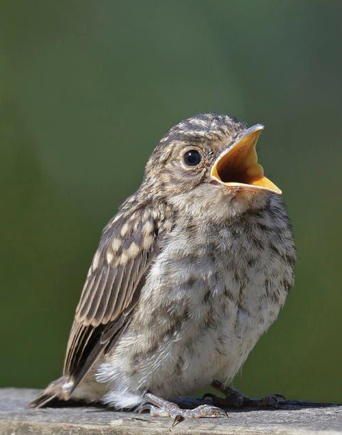 Soñar con pájaro bebe
