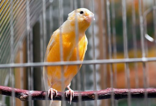 Soñar con pájaros en jaula