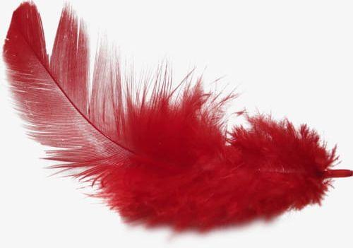 soñar con pájaro cardenal