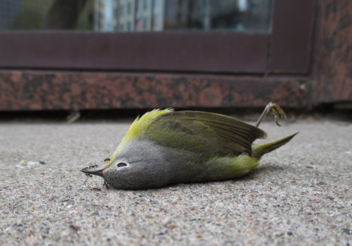 Soñar con un pájaro muerto