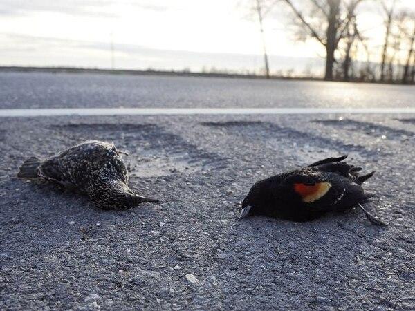 Soñar con pájaros muertos