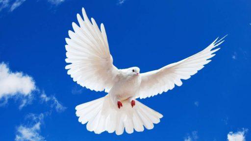 significado de los sueños con palomas