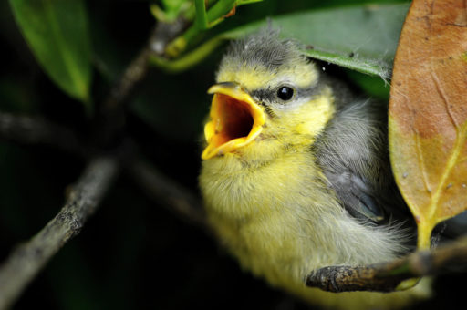 Soñar con Pájaros que Atacan