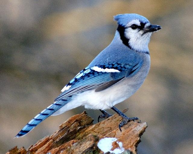 significado de los sueños con pájaros azules