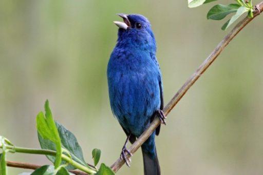 soñar con pájaro azul