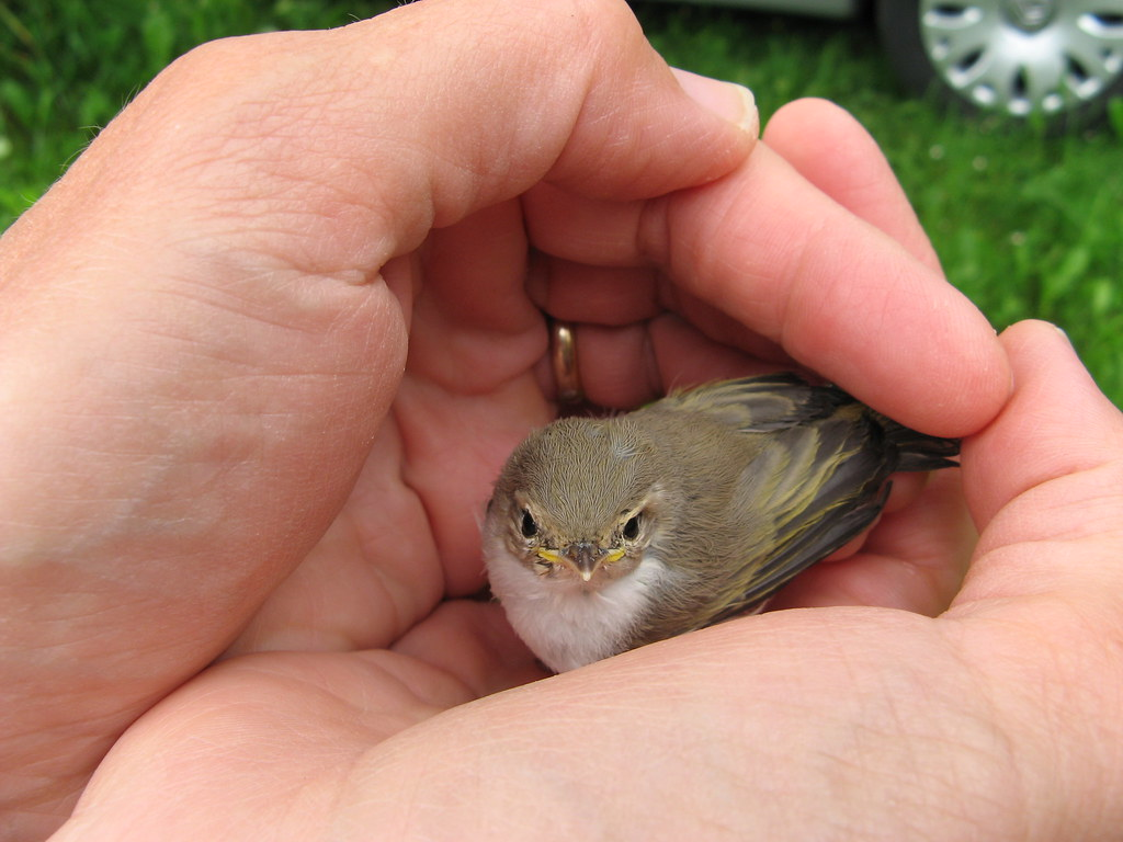 soñar con pájaros en las manos