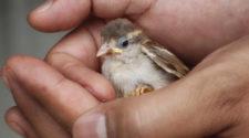 soñar con pájaro en mano