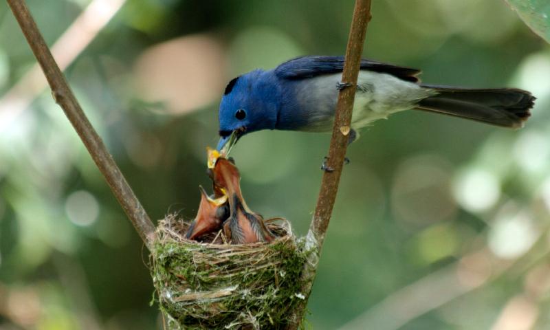 significado de los sueños con pájaros bebés