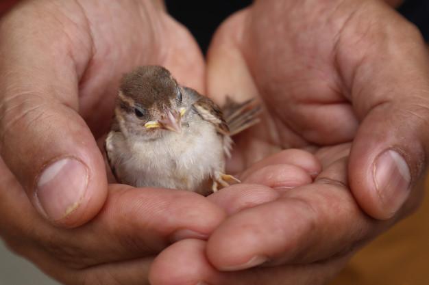 soñar con pájaro en la mano
