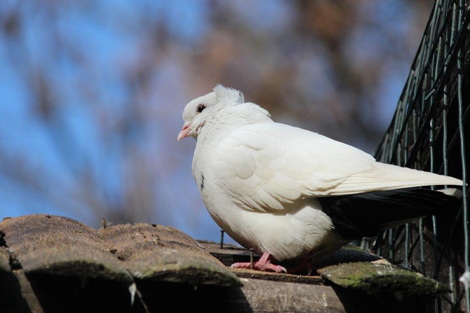 Soñar con Pájaros Blancos